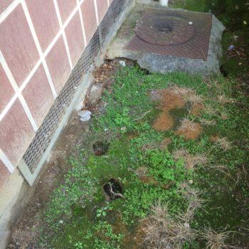 Jardin biotik servicios de control ambiental for Ahuyentar ratas jardin