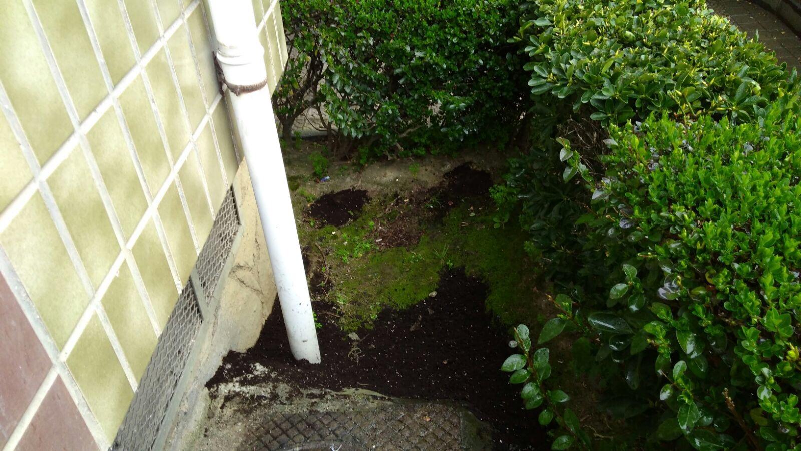 Ratas en el jard n biotik servicios de control ambiental for Ahuyentar ratas jardin